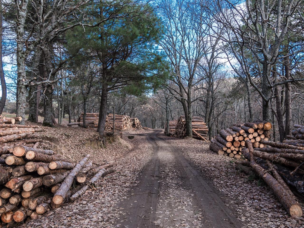 13.09.21: Круглый стол с лесоэкспортерами по вопросам контроля таможенной стоимости